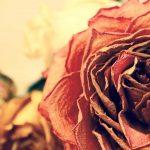 Exemple condoléances simple